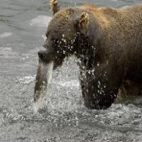 I learn to eat like a bear