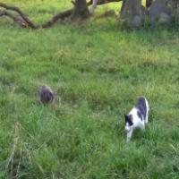walking with kitties