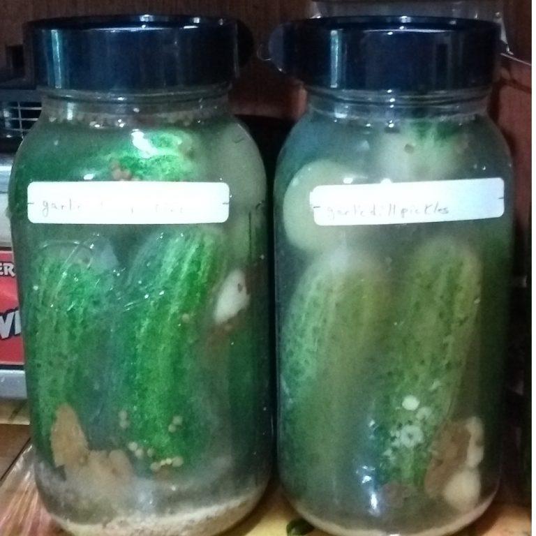 old fashioned garlic dill pickle recipe (fermented)